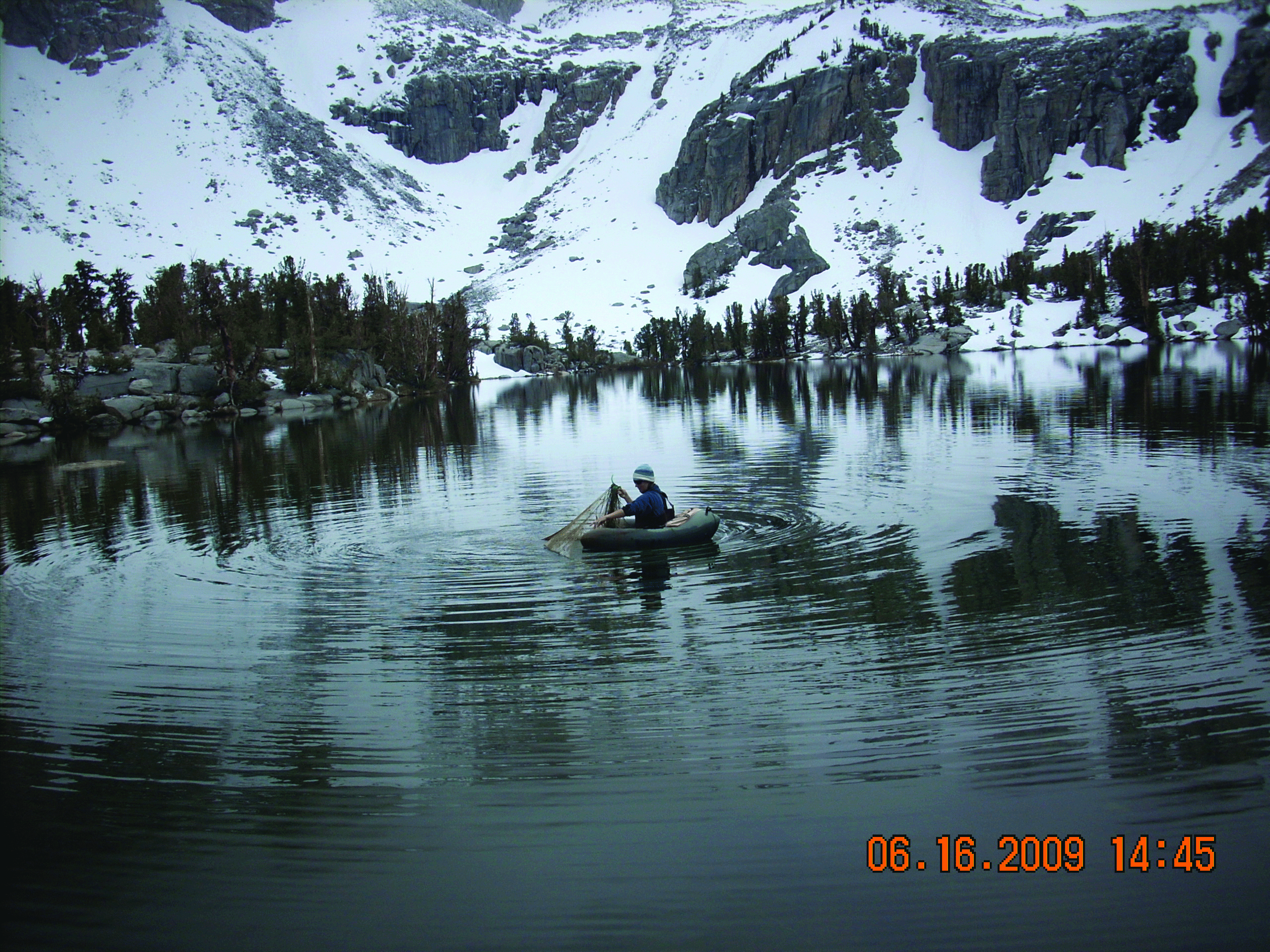 CDFW Biologist checks a gill net used for fish monitoring at Matlock Lake in Inyo County, off the KEarsarge Pass Trail